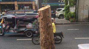 """ตัดแบบนี้โค่นเลยไหม! ชาวเน็ตถาม""""ต้องการอะไร"""" ทำไมตัดต้นไม้ที่สีลม"""