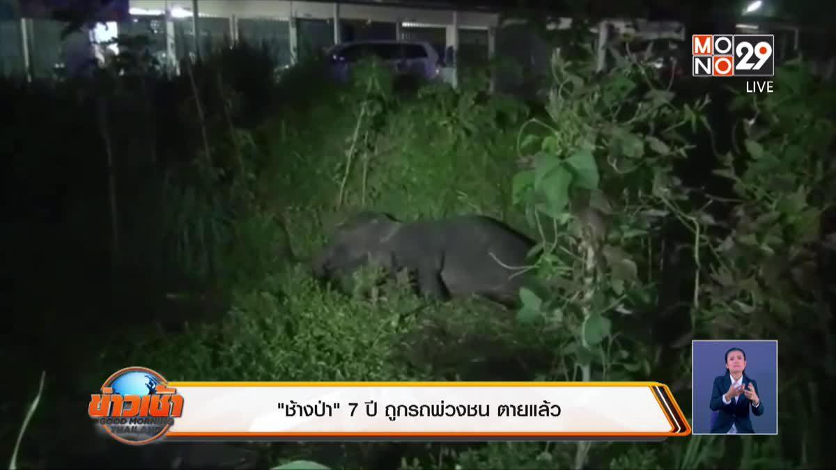 """""""ช้างป่า"""" 7 ปี ถูกรถพ่วงชน ตายแล้ว"""