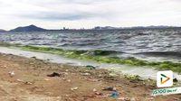 ปรากฏการณ์ 'แพลงก์ตอนบลูม' ชายหาดบางแสน น้ำทะเลกลายเป็นสีเขียว