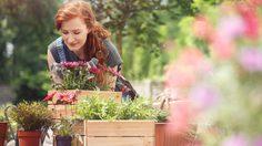 9 ดอกไม้ปลูกหน้าบ้าน เป็นมิตรต่อผู้ป่วยภูมิแพ้  ปลูกได้ แคร์สุขภาพ