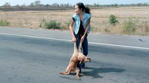 แห่แชร์ภาพสาวเซอร์น้ำใจงาม ลงเก็บศพหมาออกจากถนน