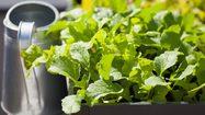 5 เทคนิค ต้องรู้ก่อน ทำ แปลงผักสวยๆ ที่คอนโด