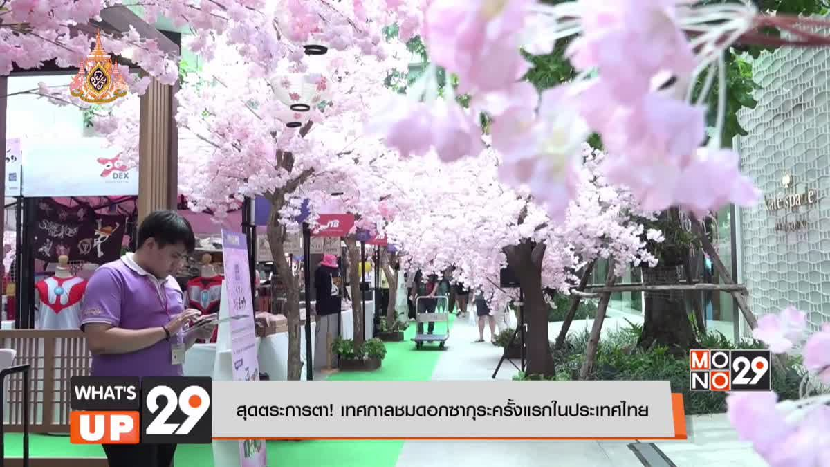 สุดตระการตา! เทศกาลชมดอกซากุระครั้งแรกในประเทศไทย