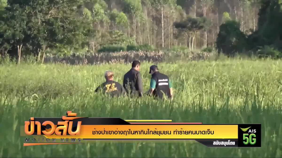 ช้างป่าเขาอ่างฤาไนหากินใกล้ชุมชน ทำร้ายคนบาดเจ็บ