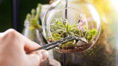รู้ก่อนพลาด! 7 ข้อควรระวังในการเลี้ยง สวนขวด ให้อยู่รอด