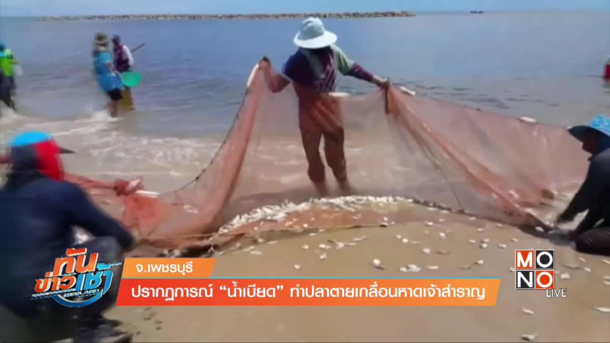 """ปรากฏการณ์ """"น้ำเบียด"""" ทำปลาตายเกลื่อนหาดเจ้าสำราญ"""