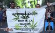 ประท้วงขอเพิ่มการใช้กัญชาในเม็กซิโก