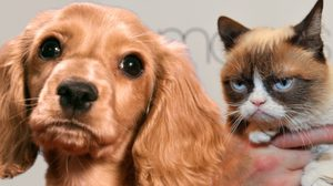 เลี้ยงหมา VS เลี้ยงแมว เลี้ยงอะไรดีกว่ากัน!?