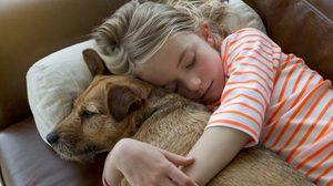 ผลวิจัยชี้!! น้องหมา สัตว์เลี้ยงแสนรัก รับรู้ได้เวลา เจ้านายป่วยไม่สบาย