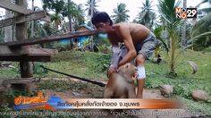ลิงคลั่งกัดเจ้าของ คาดเข้าสู่ช่วงวัยรุ่น เจ้าของเผย แม้ถูกกัดยัง รัก เอ็นดูเหมือนเดิม