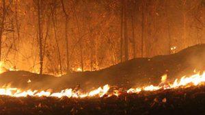 ประจวบอากาศแล้งหนัก! ไฟไหม้สวนยาง เสียหายกว่า 100 ไร่