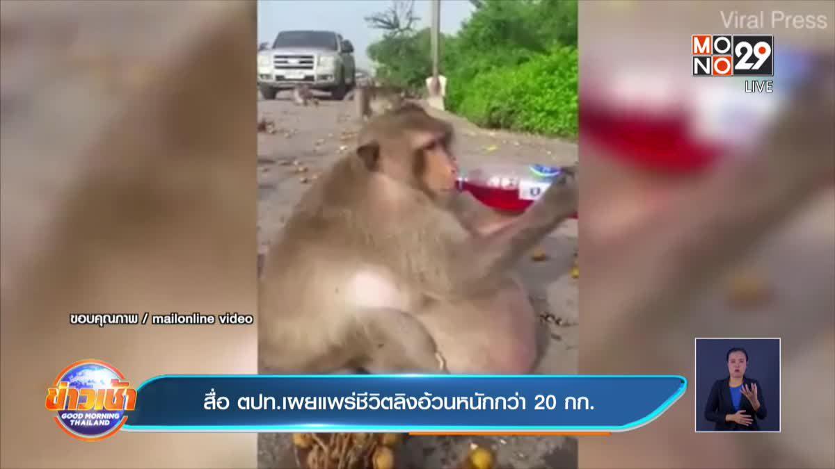 สื่อ ตปท.เผยแพร่ชีวิตลิงอ้วนหนักกว่า 20 กก.