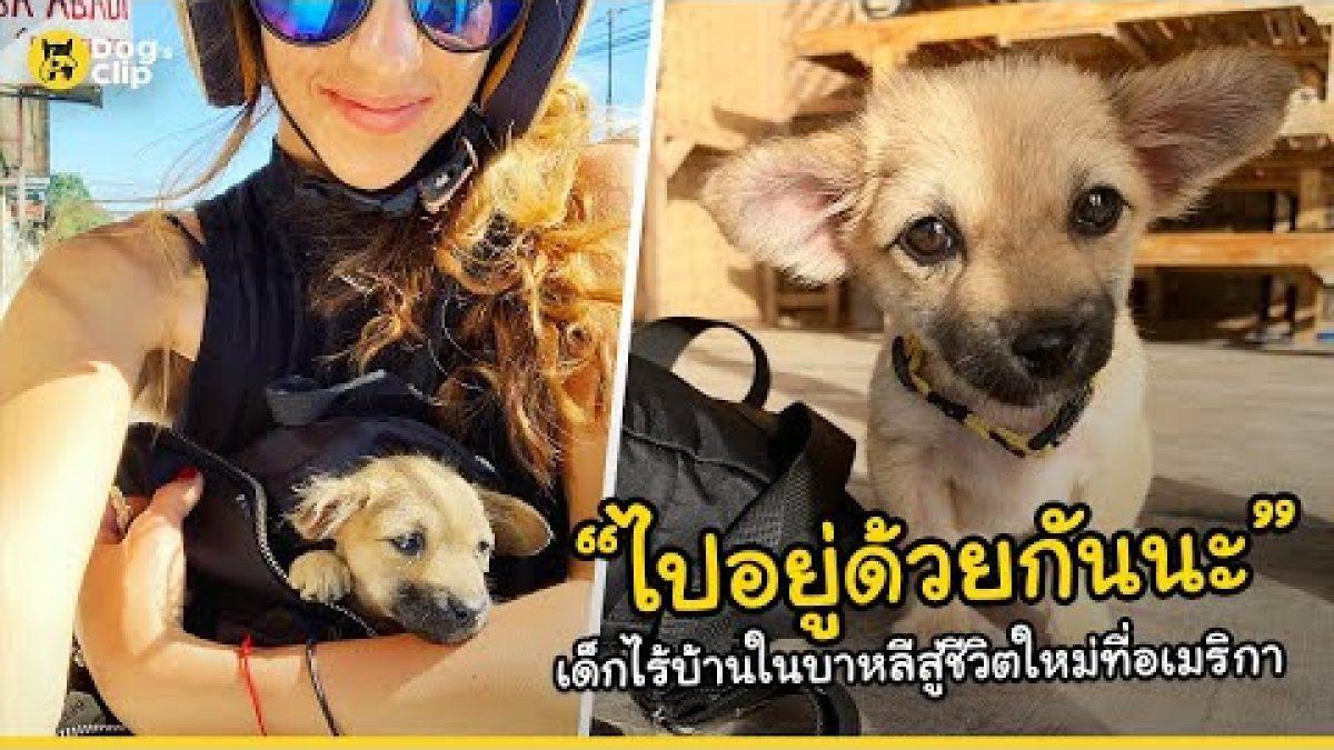 ลูกหมาน่ารักตัวเล็กไร้บ้านในบาหลีได้พบกับชีวิตใหม่ที่อเมริกาด้วยน้ำใจจากสาวใจดี | Dog's Clip