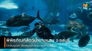 กำเงิน 80 บาท ไปเดินดูโลกใต้ทะเล ที่ พิพิธภัณฑ์สัตว์น้ำบางแสน จ.ชลบุรี