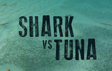 Shark vs Tuna ฉลาม ปะทะ ทูนา
