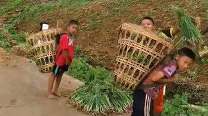 น่ารัก กลุ่มเด็กชายชนบท แบกหอมแดงกลับบ้าน ช่วยแบ่งเบาภาระครอบครัว