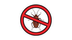 3 วิธี ไล่แมลงสาบ แบบไร้สารพิษให้ไปไม่กลับดีต่อคนดีต่อใจ