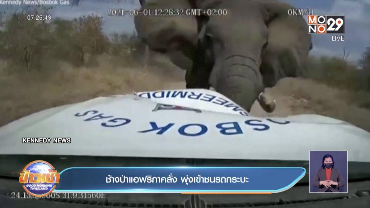 ช้างป่าแอฟริกา คลั่ง พุ่งเข้าชนรถปิคอัพ