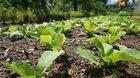 แจกตาราง ปลูกผักสวนครัว ตามฤดูกาลให้มีกินตลอดทั้งปี