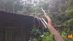 พายุฝนถล่ม! หักโค่นต้นเทียม อายุกว่า 60 ปี ทับบ้านเรือนประชาชนเสียหาย