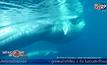 """พบวาฬ """"โอมูระ"""" นอกชายฝั่งมาดากัสการ์"""
