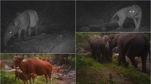 กรมอุทยานฯเผยภาพน่ายินดี! หลังพบสัตว์เสี่ยงสูญพันธุ์ ในพื้นที่ป่าของประเทศไทย