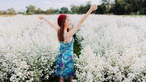 6 พิกัดเที่ยวชม ทุ่งดอกไม้ เชียงใหม่ สวยน่าไปถ่ายรูป