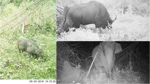 อุทยานแห่งชาติฯ น้ำหนาว โชว์ภาพ camera traps พบพื้นที่และสัตว์ป่าสมบูรณ์