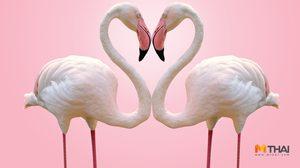 เคล็ดลับเสริมรัก ตามวันเกิด ประจำเดือนพฤษภาคม 2561 โดย อ.อ้าย