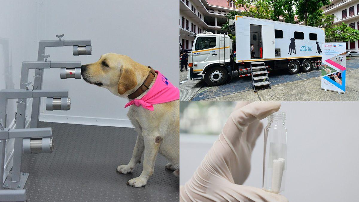 """จุฬาฯ พัฒนา """"รถดมไว"""" คันแรกในไทย ใช้สุนัขดมกลิ่นลงพื้นที่คัดกรองผู้ติดเชื้อโควิด-19"""