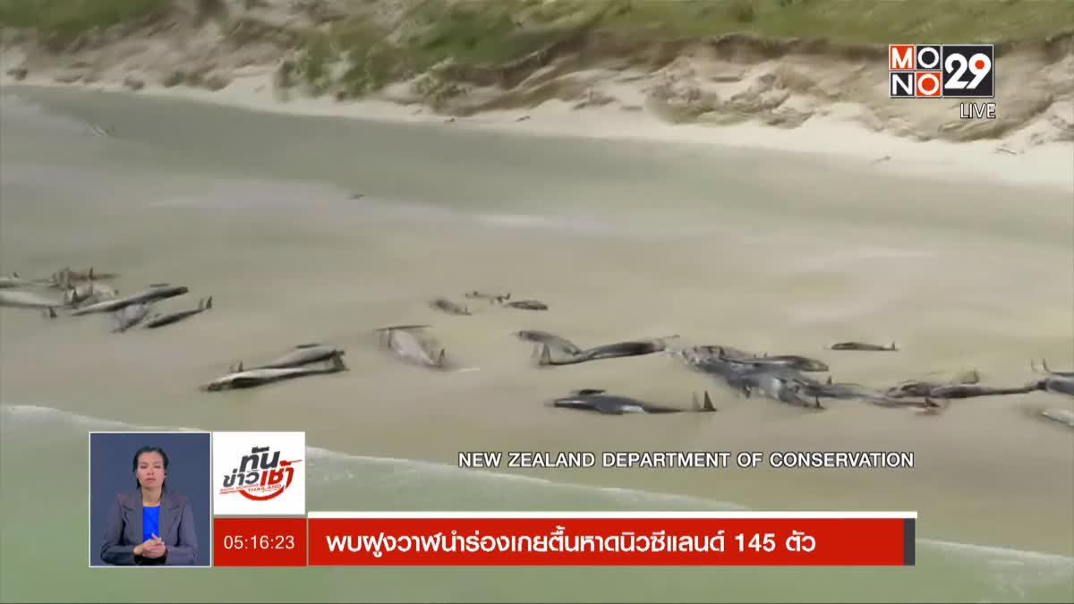 พบฝูงวาฬนำร่องเกยตื้นหาดนิวซีแลนด์ 145 ตัว