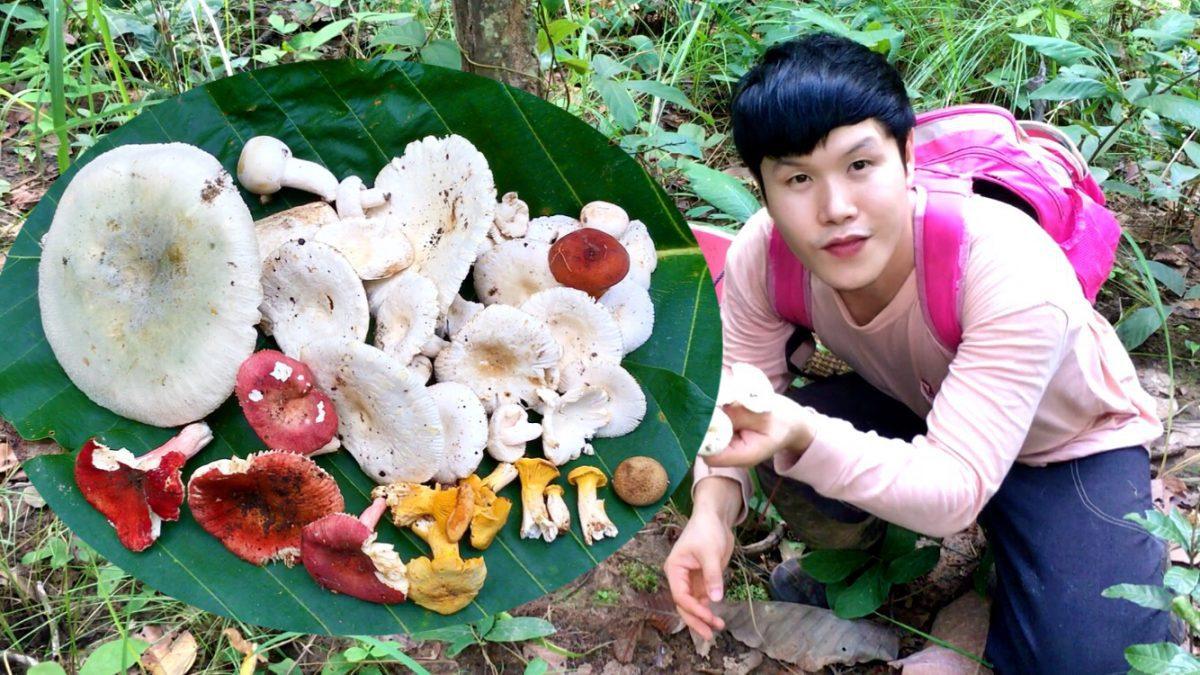 ใช้ชีวิตในป่ากับสราวุฒิ : หาเห็ดป่า ช่วงต้นฤดูหนาว (Find wild mushrooms early winter season /  在冬季初发现野生蘑菇)
