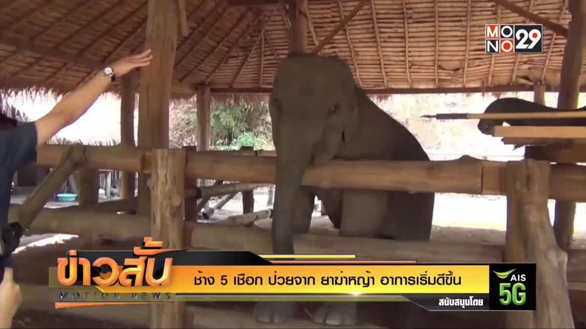 ช้าง 5 เชือก ป่วยจาก ยาฆ่าหญ้า อาการเริ่มดีขึ้น