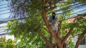 4 เทคนิคตัดแต่งต้นไม้ รอบบ้านงานที่ต้องทำก่อนหน้าฝนจะมาเยือน