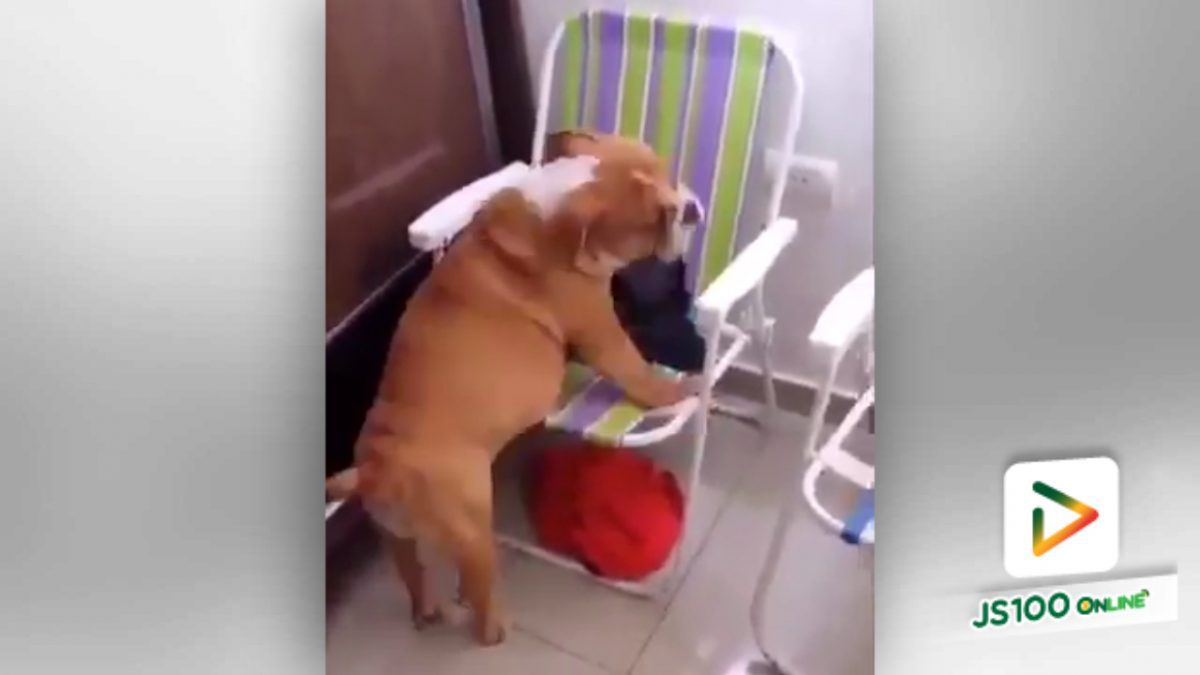 เก้าอี้เล็กไปไหมสำหรับผม? (6-5-61)