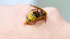 วิธีปฐมพยาบาลเบื้องต้น เมื่อโดน ผึ้งต่อย ทําอย่างไรให้หายบวม!!