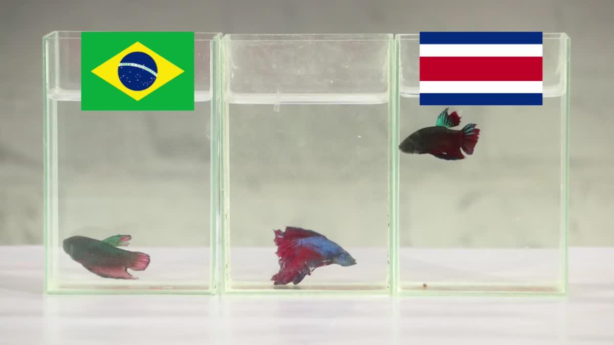 ซี้ซั้วเอามาเล่า ฟันธง ฟุตบอลโลก 2018 EP7