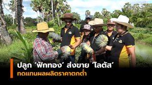 เกษตรกร จ.สงขลา รวมกลุ่มปลูก 'ฟักทอง' ส่งขาย 'โลตัส' 11 จังหวัดใต้ ทดแทนผลผลิตราคาตกต่ำ