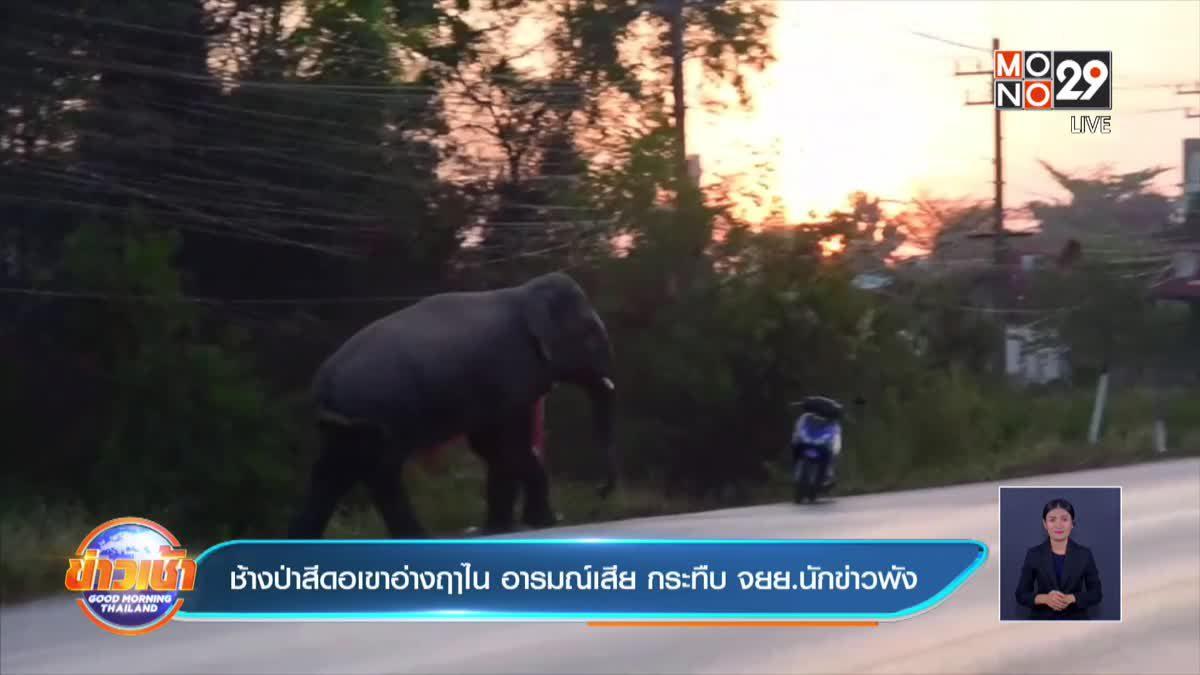 ช้างป่าสีดอเขาอ่างฤาไน อารมณ์เสีย กระทืบ จยย.นักข่าวพัง