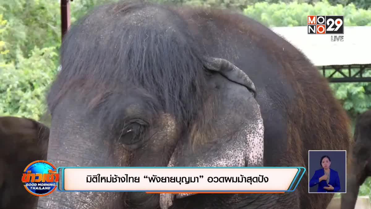 """มิติใหม่ช้างไทย """"พังยายบุญมา"""" อวดผมม้าสุดปัง"""