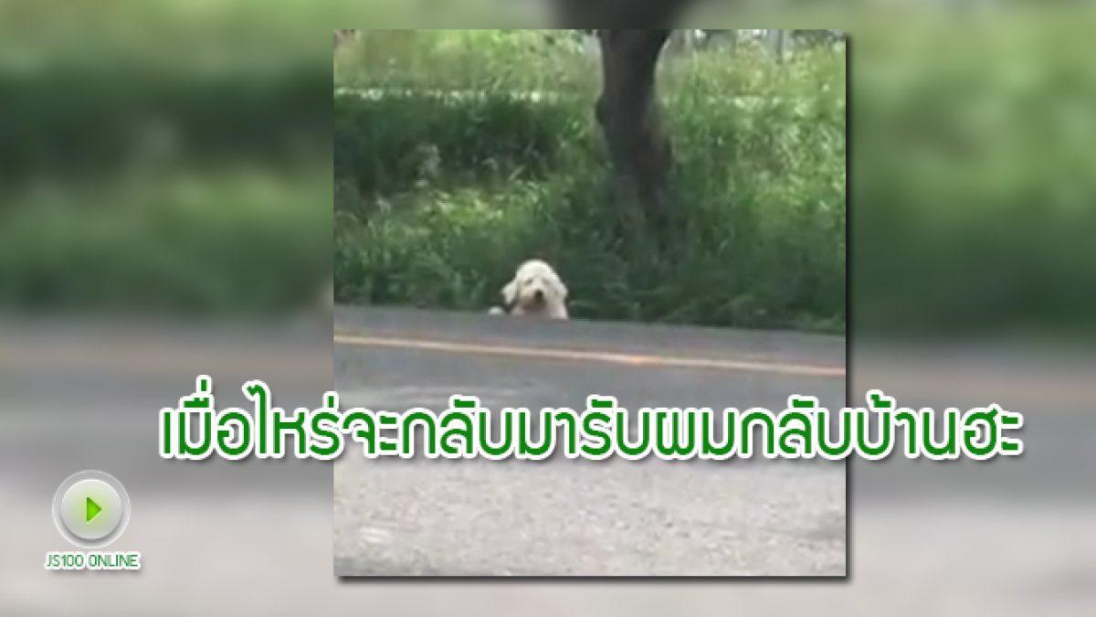น้องหมาของใคร นั่งรอเจ้าของอยู่ริมถนนบายพาส ชะอำ - หัวหิน
