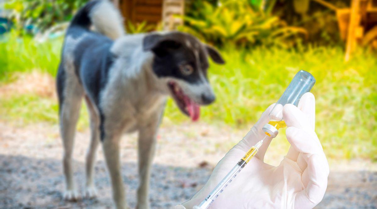 โรคพิษสุนัขบ้า จริงหรือ? สัตว์ที่เป็นจะกลัวน้ำ รับวัคซีนพิษสุนัขบ้าช่วงโควิด-19 ได้หรือไม่