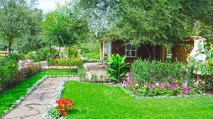 4 ประโยชน์ของการ ปลูกต้นไม้ ไว้ในบ้าน