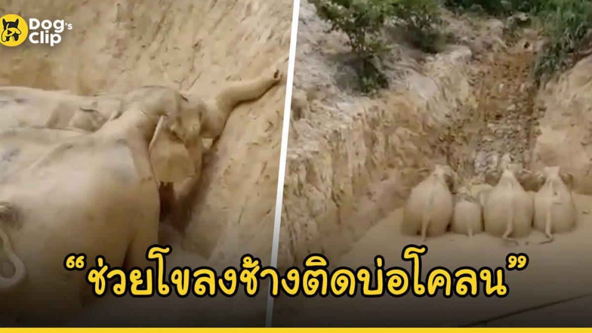 เจ้าหน้าที่ใช้เวลานานกว่า 6 ชั่วโมงช่วยชีวิตโขลงช้างที่ติดอยู่ในบ่อโคลนลึก