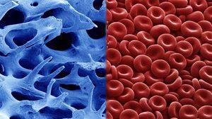 ภาพอวัยวะของมนุษย์ เมื่อมองผ่านกล้องจุลทรรศน์