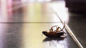 4 ข้อต้องรู้ช่วย กำจัดแมลงสาบ ออกจากบ้านได้อย่างตรงจุด