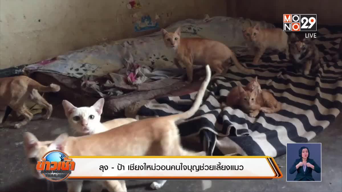 ลุง -ป้า เชียงใหม่วอนคนใจบุญช่วยเลี้ยงแมว