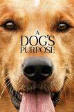 A Dog's Purpose หมา เป้าหมาย และเด็กชายของผม