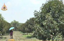 เปิดสวนผลไม้ให้ท่องเที่ยวเชิงเกษตร