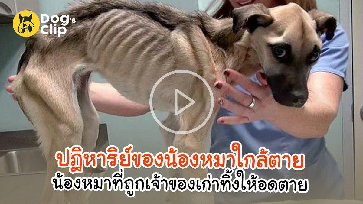ปฎิหาริย์ของน้องหมาใกล้ตาย น้องหมาที่ถูกเจ้าของเก่าทิ้งให้อดตายอย่างทรมาน